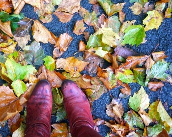 fall-semester.jpg